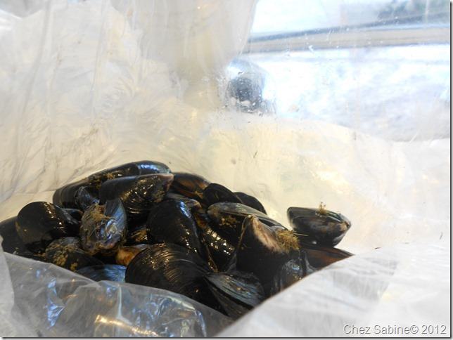 Mussels 034