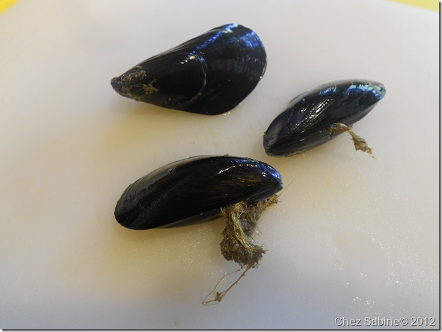 Mussels 037