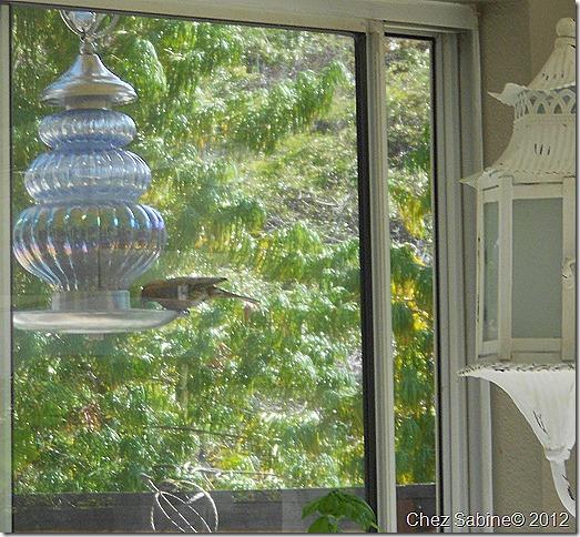 bird feeder 001