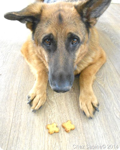 Dog cookies 055