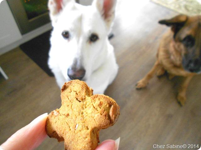 Dog cookies 063